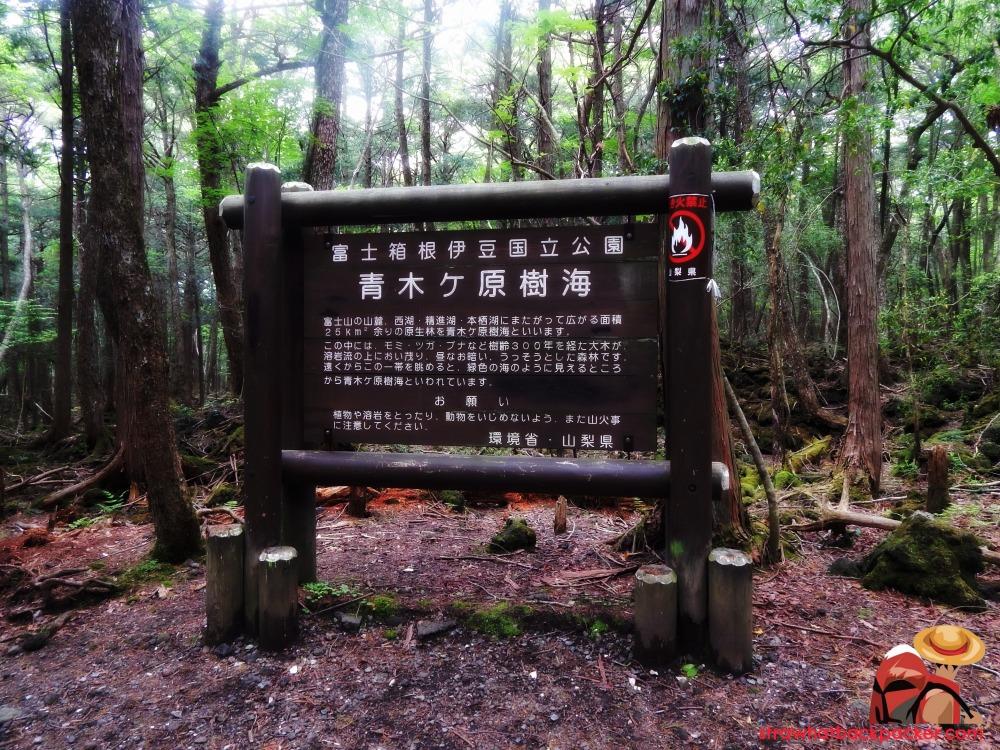 aokigahara51.jpg